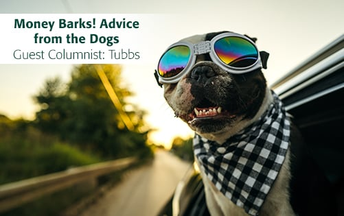 Read Money Barks! Advice from the Dogs