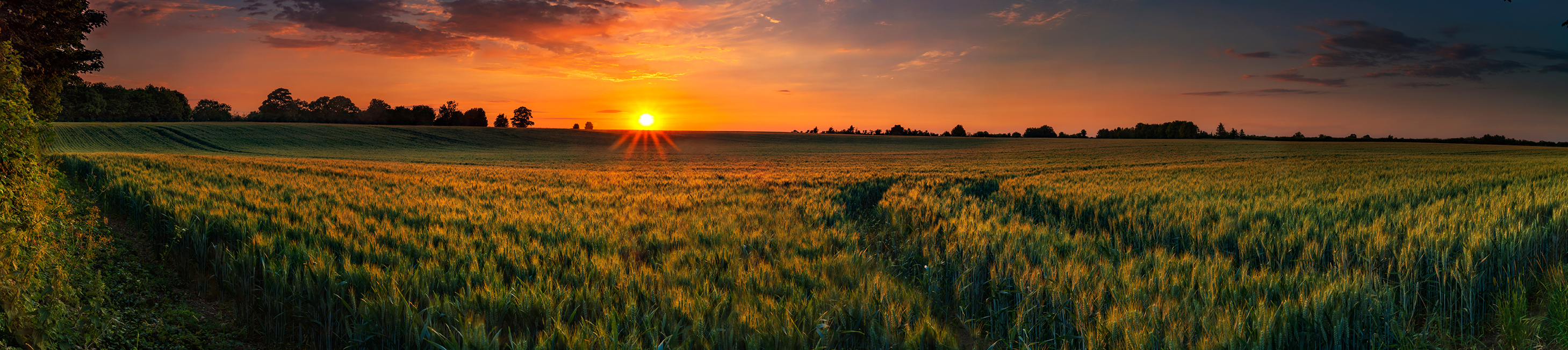 Sunset on a wheat field